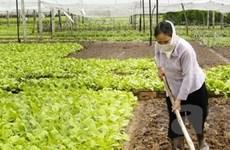 Ngành nông nghiệp phấn đấu xuất khẩu đạt 28,5 tỷ USD