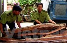 Bắt 1 vụ khai thác gỗ quý trái phép với quy mô lớn