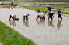 Người dân tại vùng lũ Yên Giang phấn khởi đón Tết
