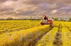 Nông dân canh cánh nỗi lo khi phải trữ lúa tại nhà