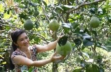 Con đường vươn xa của trái cây đặc sản Tiền Giang