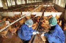 Hà Nội bổ sung 16 tỷ đồng phòng dịch bệnh gia cầm