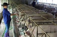 Ngành chăn nuôi lao đao vì giá biến động thất thường