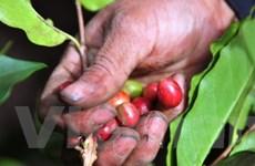 Sức ép về nguồn cung đẩy giá nông sản đi xuống