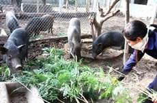 Hướng phát triển nông nghiệp đột phá cho Tây Nguyên