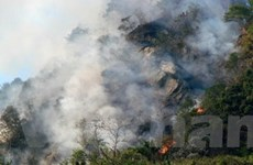 Kịp thời dập tắt một vụ cháy rừng keo tại Quảng Ngãi