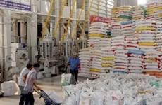 Hỗ trợ hơn 1.350 tấn gạo cho 2 tỉnh Nghệ An, Lào Cai