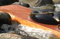 Nhức nhối tình trạng chuyển gỗ trái phép ở sông Tang