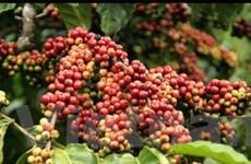 10 triệu USD phát triển chuỗi bán lẻ cà phê sạch