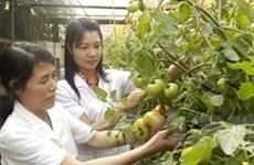 Dự luật Bảo vệ thực vật: Chế tài sẽ rất nghiêm khắc