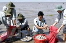 Thúc đẩy mô hình phát triển chuỗi thủy sản bền vững