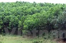 Khôi phục và trồng hơn 600 ha rừng Trung Trường Sơn