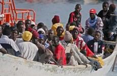 OECD cảnh báo chính sách hạn chế nhập cư