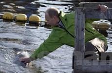 Thủ tướng Putin chinh phục lòng hồ Baikal
