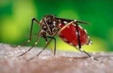 Dùng muỗi biến đổi gen để tiêu diệt muỗi