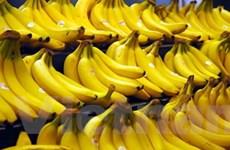 Mỹ Latinh-EU đạt thỏa thuận về nhập khẩu chuối