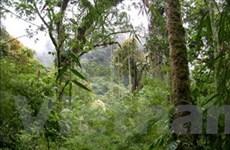 Mưa giải nhiệt cho gần 10.000ha rừng An Giang