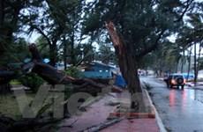 Bão số 1 suy yếu thành vùng áp thấp gây mưa lớn