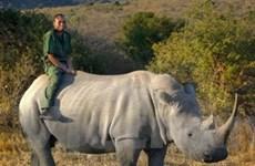 Nam Phi lập ủy ban bảo vệ động vật hoang dã
