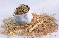 Thế giới đối mặt nguy cơ giá lương thực tăng cao