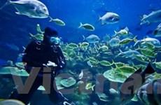 Sharm el-Sheikh - Điểm du lịch lặn biển tuyệt vời