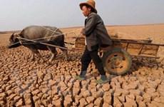 40 triệu ha đất canh tác ở Trung Quốc bị hạn hán