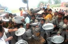 Lo ngại về khủng hoảng lương thực dần lắng dịu