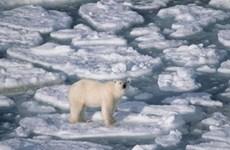 Mức nước đại dương dâng thêm 12mm do băng tan