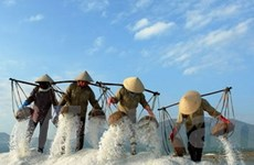 Diêm dân Ninh Thuận: Muối được mùa và cao giá