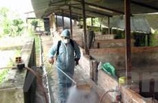 Nam Định ra quyết định công bố dịch lợn tai xanh
