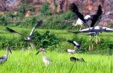 Loài chim lạ tại Lai Châu cần được bảo vệ khẩn cấp