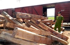 Quảng Ngãi khởi tố vụ chuyển trên 100m3 gỗ lậu