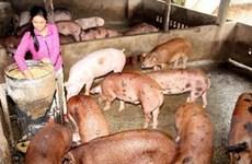 Xiết công tác quản lý dùng chất cấm trong chăn nuôi