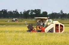 Việt Nam sẵn sàng giúp Namibia sản xuất lúa gạo
