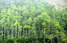 Thanh Hóa-Houaphan phối hợp bảo vệ rừng biên giới