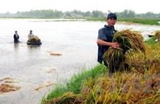 Khôi phục sản xuất nông nghiệp sau cơn bão số 8