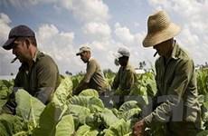 Cuba vững bước trên đường cập nhật mô hình kinh tế