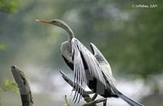 Hậu Giang: Nhiều loài chim trong sách đỏ về sinh sống
