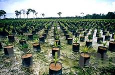 UNDP: Indonesia cần nỗ lực cải thiện quản trị rừng