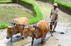 Lần đầu tiên trao cúp vì sự phát triển nông nghiệp