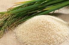 Thái Lan có thể mất thế dẫn đầu xuất khẩu gạo