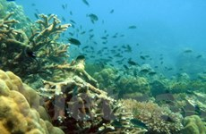 Hệ sinh thái biển đem lại 80 triệu USD mỗi năm