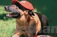 Lễ hội quốc tế tôn vinh chó nòi ở Leipzig