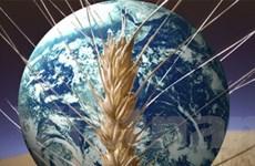 An ninh lương thực đang thách thức nhiều quốc gia
