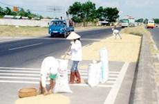 Hà Nội ngăn chặn việc phơi thóc lúa trên đường