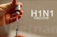 Biến thể A/H1N1 không ảnh hưởng vắcxin phòng dịch