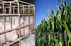 400 tỷ đồng đầu tư cho giống cây trồng, vật nuôi