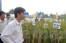 Bàn giải pháp tăng hiệu quả xuất khẩu gạo VN