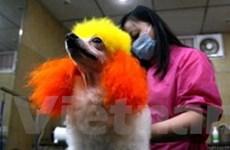 Trung Quốc: Ăn thịt chó và tiểu hổ sẽ bị phạt tù