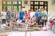 Hà Nội truy tố 35 bị can trong vụ trộm gỗ sưa
